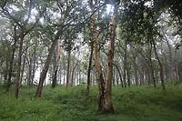 Dubare forest, natural reserve