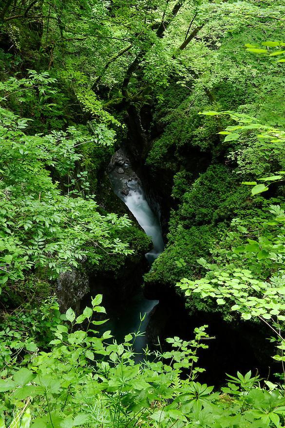Zadlascica canyon, river Zadlascica, forest<br /> Triglav National Park, Slovenia<br /> June 2009