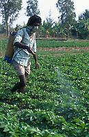 INDIA westbengal, farmworker spraying toxic pesticide cocktail without safety mask in vegetable field / INDIEN Landarbeiter sprühen ungeschützt giftige Pestizide Pflanzenschutzmittel im Gemüse Feld gegen Schädlinge