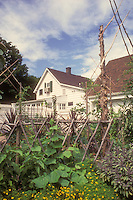 Trellis cucumbers, marigolds, sage herbs, cordoned fruit trees, in mixed vegetable garden with house, fence, garage