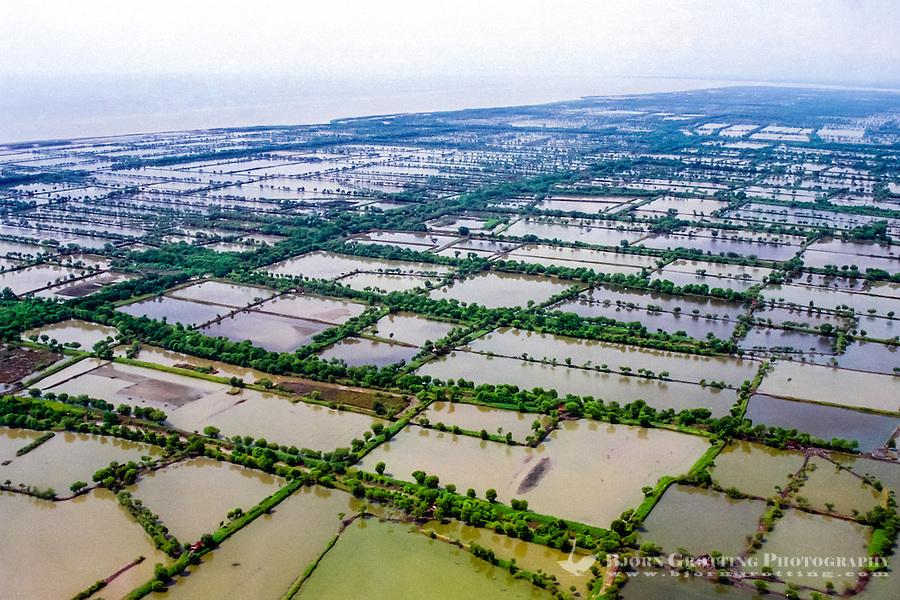 Java, East Java, Surabaya. Sawah tambak rice-fish system outside Surabaya. Literally sawah tambak means ricefield pond (brackishwater) (rom helicopter).