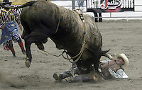 29 Aug 2004: PRCA Rodeo Bull Rider Myron Duarte ranked 5th in the world riding the bull Real Deal gets tossed during the PRCA 2004 Extreme Bulls competition in Bremerton, WA. Myron won the overall competition with a combined score of 176.