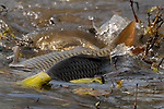 ESOPUS BEND PRESERVE- FISH