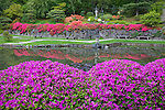 Seattle, WA<br /> Evergreen azaleas blooming in the Japanese garden in the Washington Park Arboretum