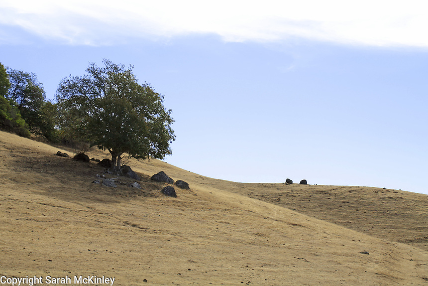 A small oak tree and rocks stand at the edge of bare, rolling hills along Reynold's Highway outside of Willits in Mendocino County in Northern California.