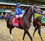 """OCTOBER 6, 2018 : Endorsed in post parade of the """"Win & You're In"""" Champagne Stakes on Champagne Stakes Day at Belmont Park on October 6, 2018 in Elmont, NY.  Sue Kawczynski/ESW/CSM"""