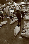 Mar 4, 2006; Tokyo, JPN; Tsukiji.A buyer drags his recently purchased frozen tuna at the Tsukiji Fish Market...After tuna is caught, it is flash frozen at sea to keep it fresh until it is brought to the market to be sold...Photo credit: Darrell Miho