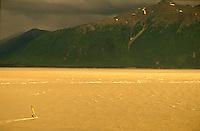Solo windsurfer on windy day at sunset, Turnagain Arm near Anchorage, Alaska