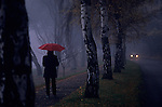 Sunrise in fog with single woman walking along lake path with fall colors holding a red umbrella with car on road Seattle Washington State USA