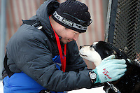Saturday March 6 , 2010    Robert Nelson gives one of his dogs a caring pet just prior to the ceremonial start of the 2010 Iditarod in Anchorage , Alaska