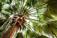 palm tree fronds as tapestry; Lotusland