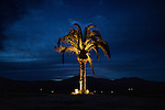 EL PORVENIR, BAJA CALIFORNIA - NOVEMBER 26, 2013:  A palm tree is illuminated at the El Cielo winery in Baja California's Valle de Guadalupe. Residents and wineries in Mexico's wine country are protesting the mayor's relaxing of zoning regulations they say will lead to a drastic change in the culture of  the popular tourist destination. CREDIT: Max Whittaker for The New York Times