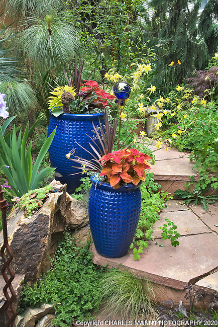 Some cobalt blue pots loaded with coleus, phormium and sweet potato vine make a colorful addition to Dan Johnson's Denver garden.