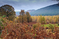 Autumn colours at Powerscourt Estate, Enniskerry, County Wicklow, Ireland.