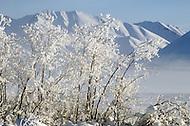 Matanuska Glacier, Alaska, U.S.A, January 1989. A sudden cold wave struck Alaska resulting to the temperature falling under 50 degrees Centigrade (58 degrees Fahrenheit).
