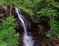 Shenandoah National Park, WA<br /> Lower Doyle's River Falls in the spring hardwood forest green