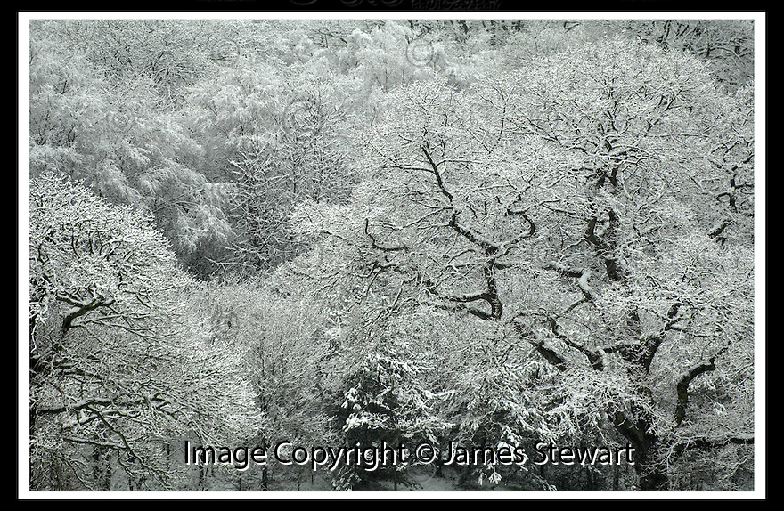 18/01/2007       Copyright Pic: James Stewart.File Name : sct_jspa10_snow.SNOWFALL AT CALLENDAR PARK, FALKIRK......James Stewart Photo Agency 19 Carronlea Drive, Falkirk. FK2 8DN      Vat Reg No. 607 6932 25.Office     : +44 (0)1324 570906     .Mobile   : +44 (0)7721 416997.Fax         : +44 (0)1324 570906.E-mail  :  jim@jspa.co.uk.If you require further information then contact Jim Stewart on any of the numbers above.........