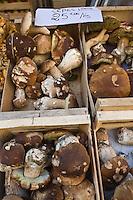 Europe/France/Midi-Pyrénées/46/Lot/Figeac: jour de marché - Place de la Halle- Etal d'un marchand de champignons-détail cèpes