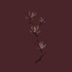 Elegant tree branch of magnolia flowers blossom Japanese Zen painting based artistic design illustration isolated on dark red burgundy brown background