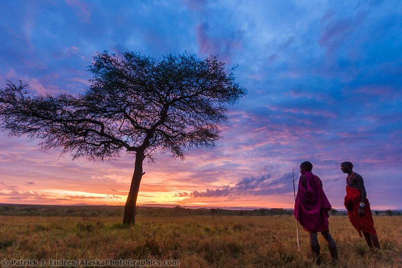 Masai tribesman at dawn on the African savannah by an umbrella acacia tree, Masai Mara, Kenya, Africa