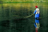 man standing in river with fishing line cast showing his reflection in water. fisherman. Wyoming USA.