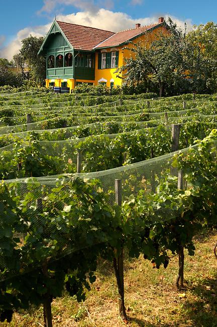 Wine cellar in the Badascony vineyards , Balaton, Hungary