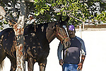 Zenyatta at Hollywood Park (see racing albums for various races)