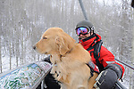 Vail Mountain's Avalanche Rescue Dog, Henry rides the chair lift with his owner, Vail lski patrol supervisor, Chris 'Mongo' Reeder.