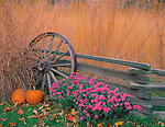 Bureau, County, IL<br /> Fall scene of native praire grasses, pumpkins, chrysantheums with weathered fence & wagon wheel