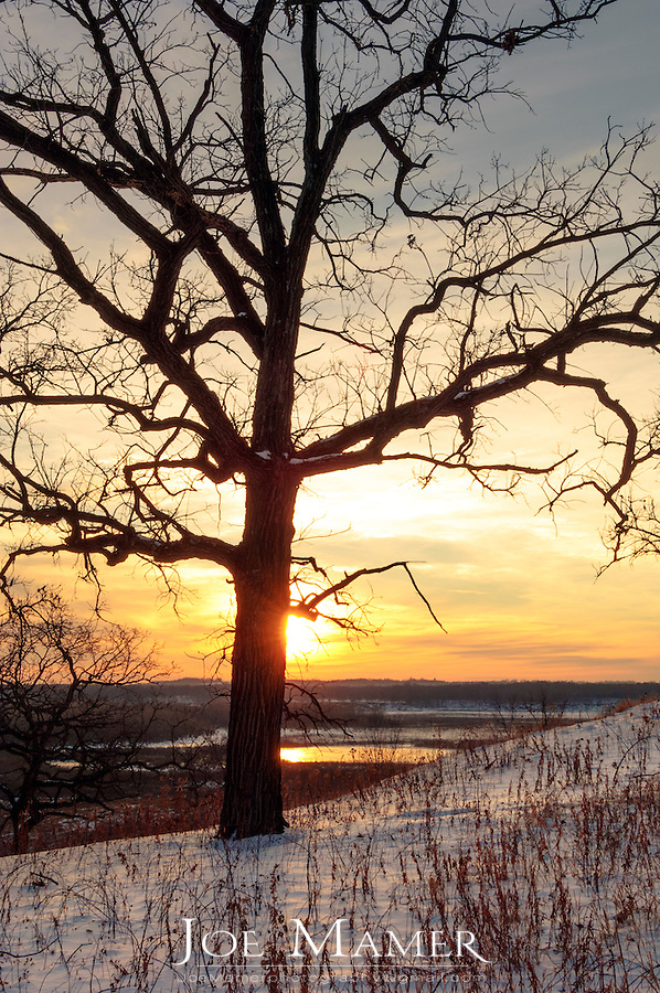 Oak tree silhouette at sunset in winter overlooking Louisville Swamp. Louisville Swamp is part of the Minnesota Valley National Wildlife Refuge. The Minnesota Valley National Wildlife Refuge is located within the urban and suburban areas of Minneapolis and St. Paul. It is a green belt of large marsh areas totaling approximately 14,000 acres, spanning 99 miles of the Minnesota River. This is one of only four American national wildlife refuges in an urban area, and the largest.