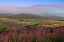 15/08/14 <br /> <br /> Seen from Ramshaw Rocks, a misty late summer purple dawn breaks over heather on The Roaches near Leek in the Staffordshire Peak District.<br /> <br /> All Rights Reserved: F Stop Press Ltd. +44(0)1335 300098   www.fstoppress.com.