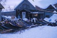 Dog Sleds at McGrath Checkpoint Iditarod 2001