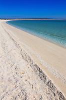 Western Australia Sharks Bay