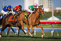 HALLANDALE, FL - JANUARY 28: Suffused (GB)l #12, ridden by Jose Ortiz win the La Prevoyante Stakes at Gulfstream Park on January 28, 2017 in Hallandale Beach, Florida. (Photo by Zoe Metz/Eclipse Sportswire/Getty Images)