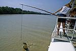 A 30 km de Darwin, la rivière Adelaïde heberge les crocodiles sauteurs. Ces crocodiles se sont habitués à sortir de l'eau pour se saisir de steaks pendus au bout d'un fil. Des croisières sont organisées pour venir les observer. Ce comportement est naturel. Certains animaux peuvent sortir de plus de 3 m hors de l'eau à la verticale pour attraper un oiseau sur une branche..Austalie. Territoire du Nord. crocodiles