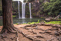 Whangarei Falls, a popular waterfall in the Northlands Region of North Island, New Zealand