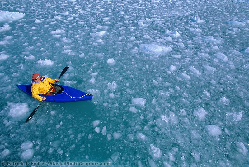 Kayaker paddles in glacier ice bergs from recently calved ice from Meares Glacier in Meares Inlet, Prince William Sound, Alaska.