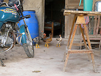 Cattle rancher's home with chickens running free, Paraguari, Paraguay