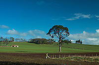 Countryside at Crathes Castle, Banchory, Aberdeenshire