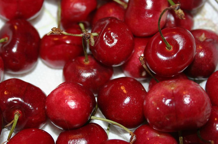 Fresh ripe cherries just harvested