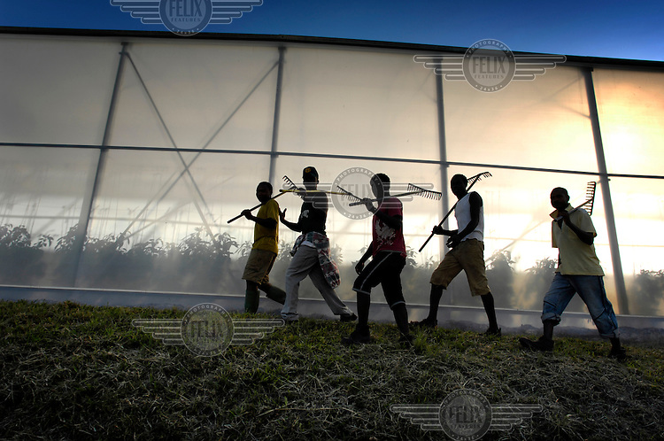 Workers between the greenhouses at a company that produces, grows and develops seeds for export to European vegetable growers and farmers. Due to the mild climate, seeds can be produced throughout the year.