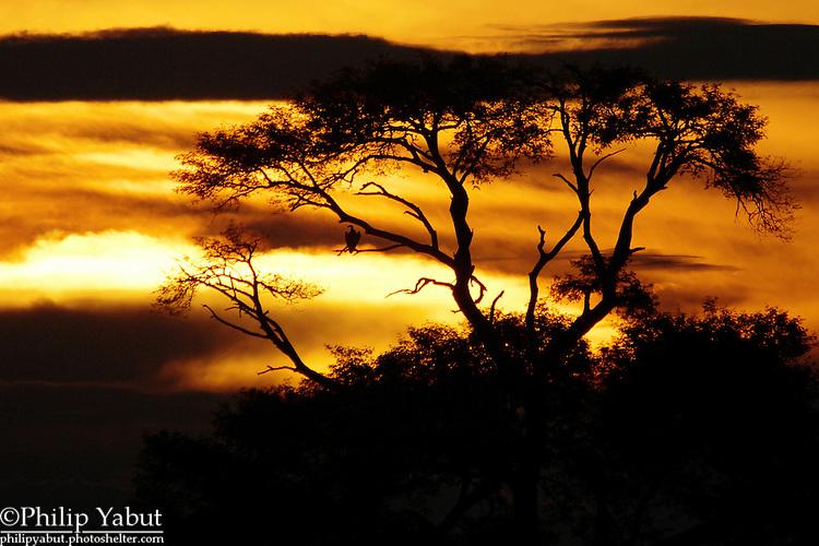 Sunset on the Zambezi River in Zimbabwe.