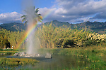 Old Faithful Geyser, Calistoga, Napa County, California