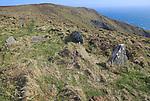Stones marking prehistoric cliff top site, Cape Clear Island, County Cork, Ireland, Irish Republic