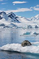 Cierva Cove, Antarctic peninsula