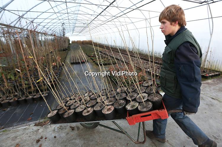 Foto: VidiPhoto<br /> <br /> OUDENBOSCH - Ook in de winter zijn er volop werkzaamheden te verrichten bij Van Aart Boomkwekerijen van Wendy en Mario van Aart uit Oudenbosch bij Roosendaal. Van Aart levert op 2,5 ha. in tunnels entmateriaal voor Nederlandse boomkwekerijen.