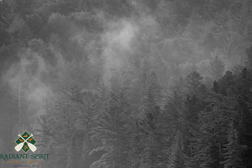 """Morning Mist and Eagle"" - B&W<br />