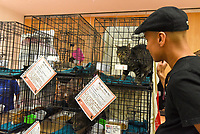 MANHATTAN ,NEW YORK, USA -JUNE 02:   Cat waiting for adoption at  Best Friends Pet Super Adoption that held its annual adoption event bringing together more than twenty pet rescue organizations  and hundreds of dogs and cats into contact with people seeking to open their hearts & homes to an animal in need on June 2, 2017 in New York. Joana Toro/VIEW press