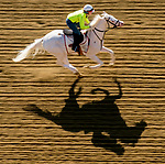 May 15, 2019 : as horses prepare for Preakness Week at Pimlico Race Course in Baltimore, Maryland. /03376532//Eclipse Sportswire/CSM