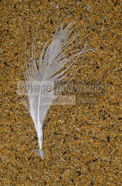 Europe/France/Bretagne/56/Morbihan/Belle-île/Port-Donnant: La plage